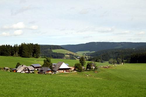 Aufnahme im Schwarzwald